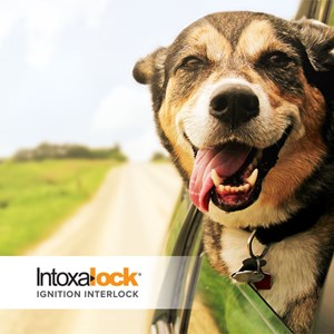 Driving with a Pet and an Ignition Interlock Device